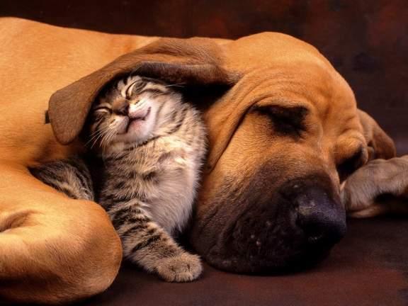 Про кошек и собак, или почему они нас не понимают